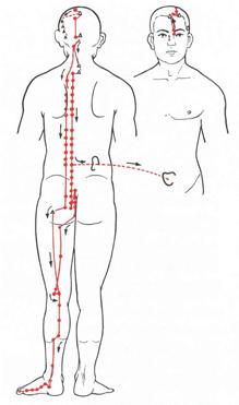 wo sitzen die menschlichen organe