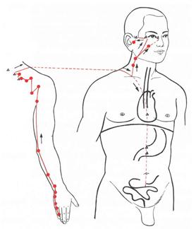 bild lymphknoten oberkörper